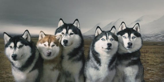 3352215_1294173009_dogs07 (571x285, 34Kb)