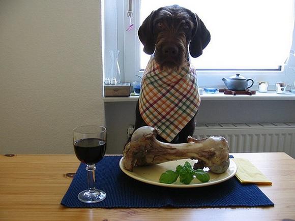 Прикольные фото собак сделанные фото-любителями