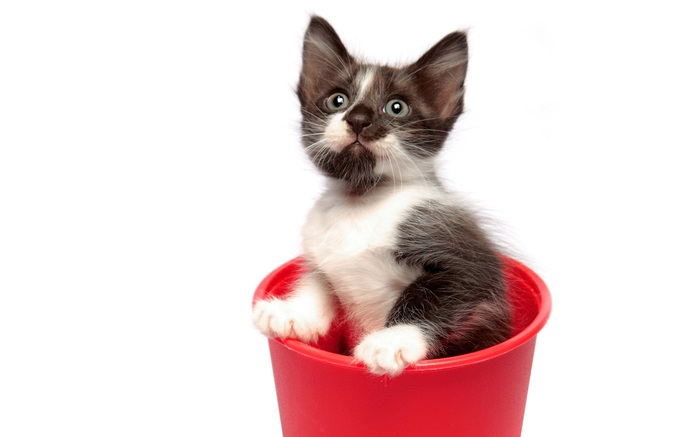 1440_Kitty in Flowerpot (700x437, 38Kb)