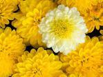 Превью 06_flowers (700x525, 55Kb)