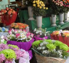 Цветы на улицах Сочи (233x212, 137Kb)