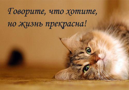 2627134_Jizn_prekrasna (500x348, 35Kb)
