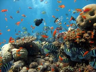 рыбки под водой (337x253, 53Kb)