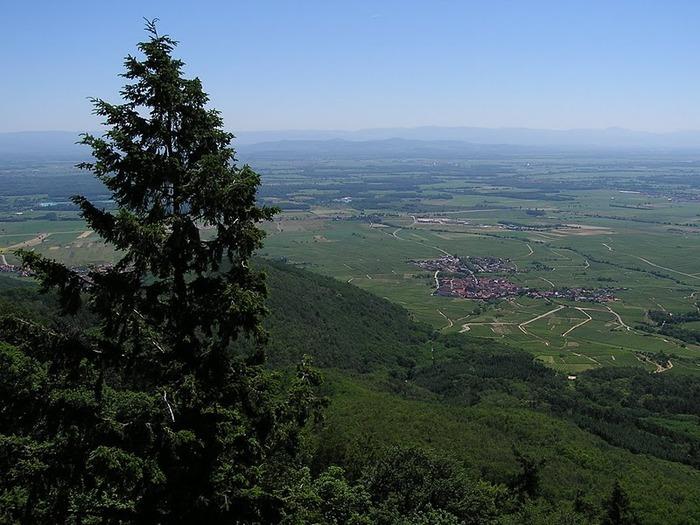 Замок Верхний Кенигсбург (Chateau du Haut-Koenigsbourg) 81211