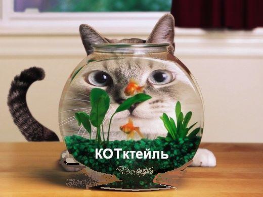 1207817_kotikthumb (520x390, 39Kb)