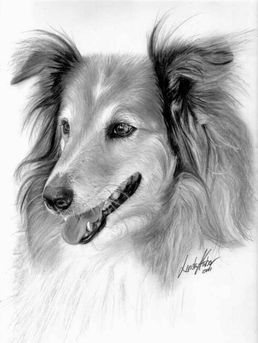 linda-huber-pencil-art-25 (526x700, 81Kb)