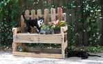 Превью bench with cats (700x442, 301Kb)