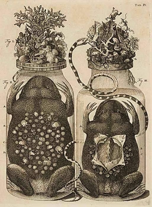 гравюры 19 века:
