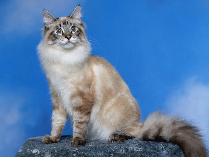 cats_043 (700x525, 99Kb)