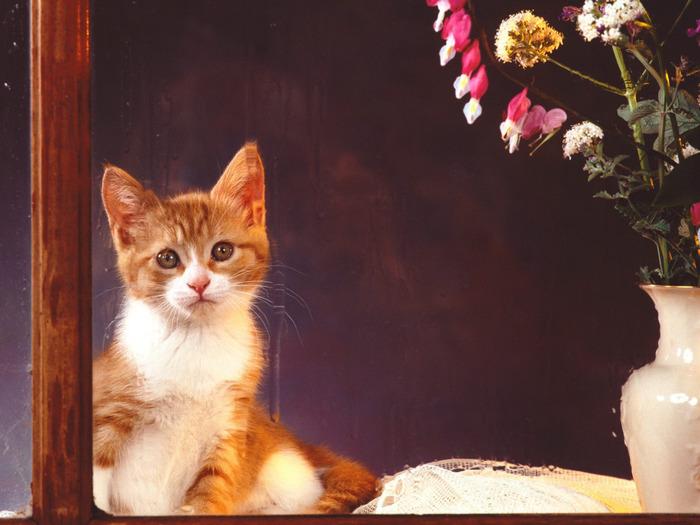 cats_045 (700x525, 108Kb)