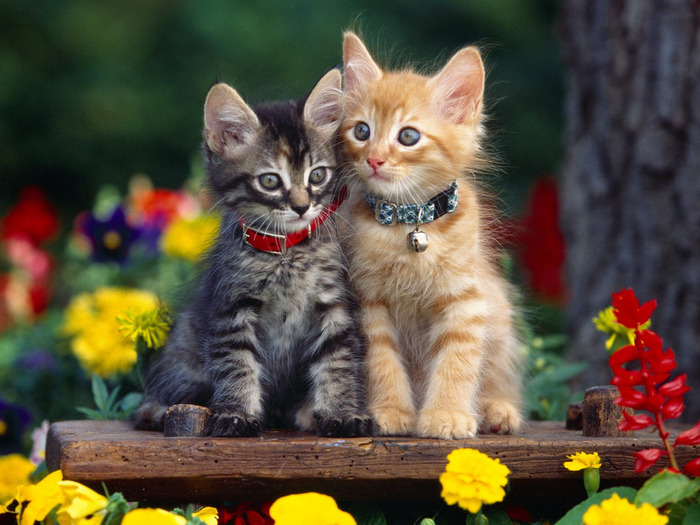 cats_049 (700x525, 134Kb)