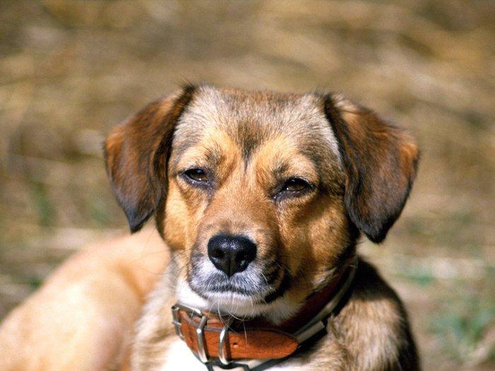 chiens_036-1 (700x525, 64Kb)