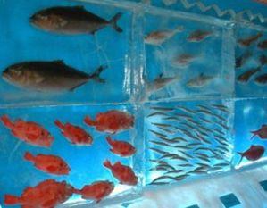 Открытие ледяного аквариума в Японии./2719143_0025641 (299x233, 15Kb)