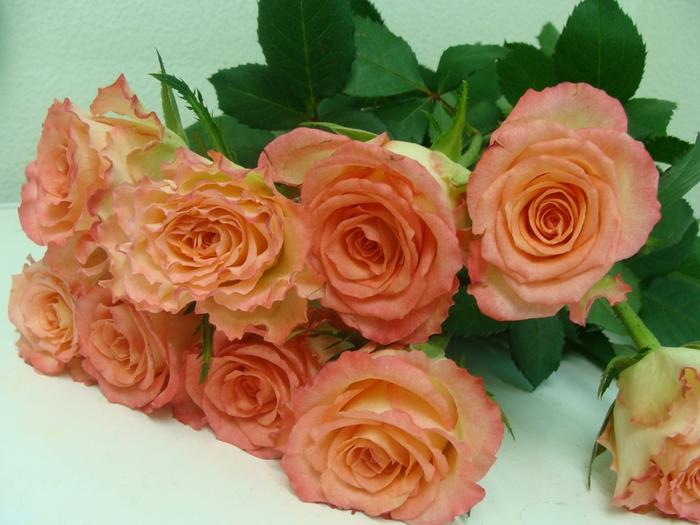 В коробках с розами и альстремериями, которые поступили для продажи, были обнаружены неизвестные брикеты, которые.