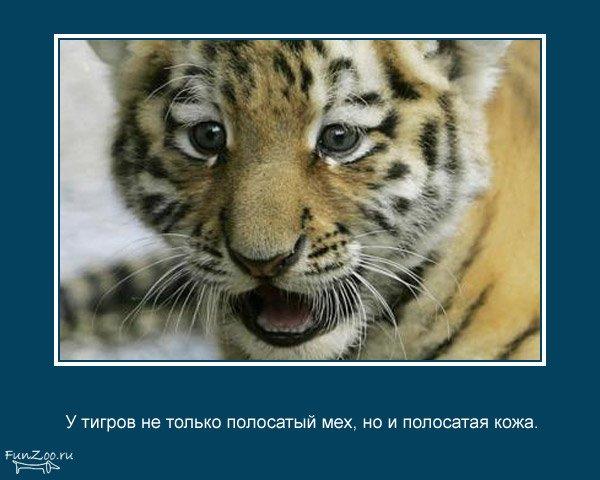 interesnye_fakty_o_zhivotnykh_25_foto_4 (600x480, 50Kb)