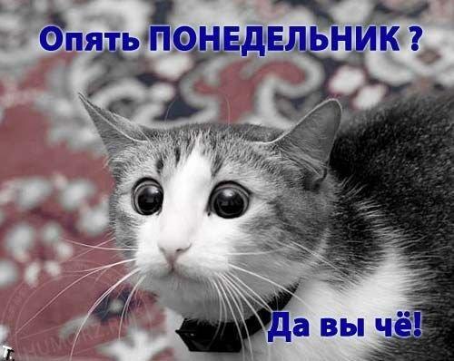 1292871719_foto-prikol_net_pozitivnye-foto-prikoly-pro-ponedelnik-13 (500x398, 43Kb)
