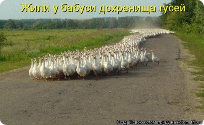 1299701431_kotomatricy_018_resize (700x428, 55Kb)
