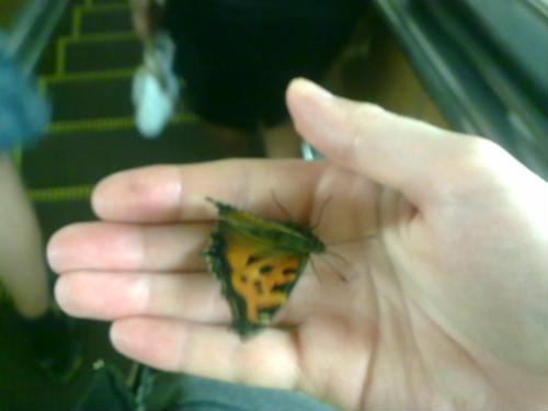 butterfly (500x375, 22Kb)