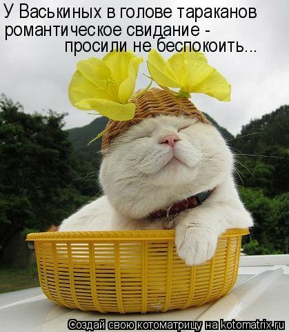 Котоматрица - У Васькиных в голове тараканов   романтическое свидание - просили не б (419x480, 44Kb)