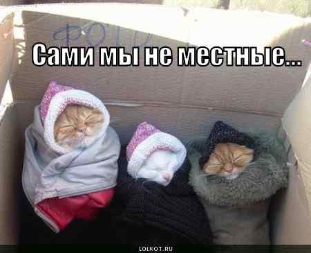 ne-mestnyye_1271568834 (450x365, 13Kb)