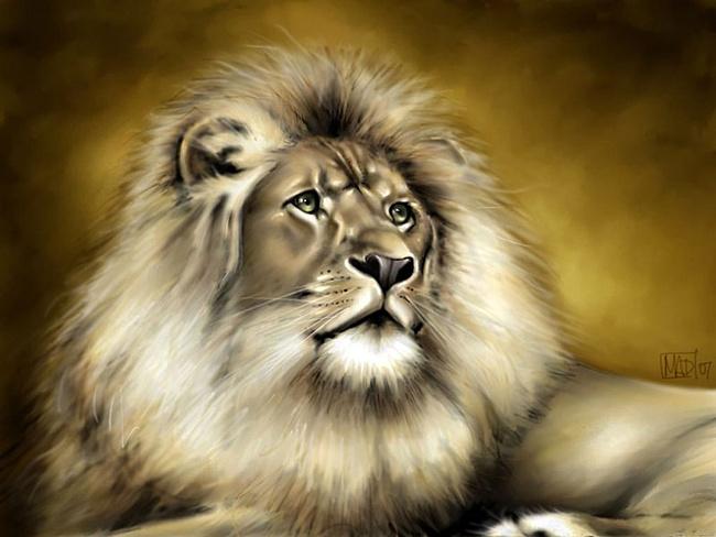 1)Король-лев(вожак) в бою,походе,общей охоте всегда находится впереди стаи.  На самом деле вперед всегда выставляют...