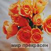 1798917_04_1_ (100x100, 23Kb)