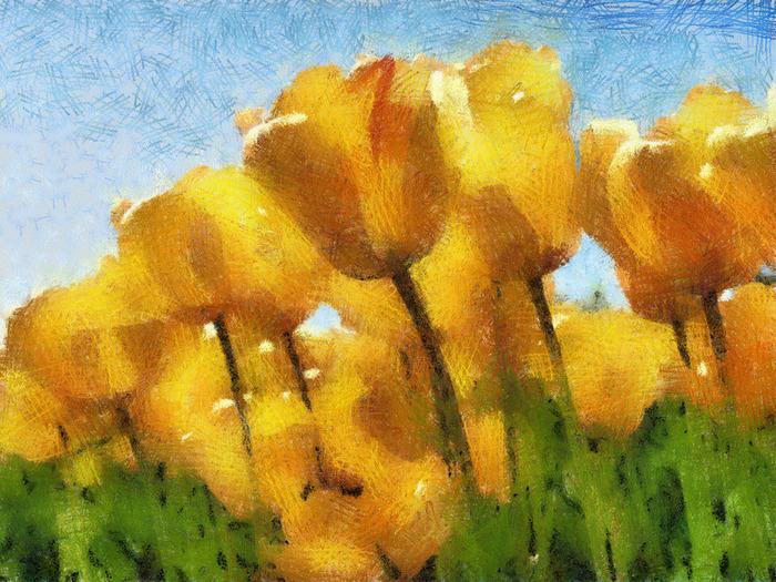 Tulips (700x525, 242Kb)