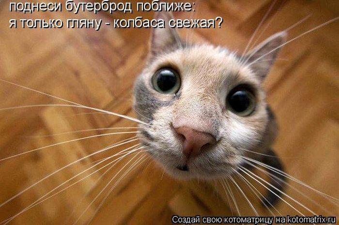 http://img0.liveinternet.ru/images/attach/c/3/76/864/76864768_kotomatritsa1.jpg