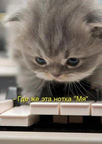 1312607764_KOTE-na-vyhodnye_12 (350x496, 29Kb)
