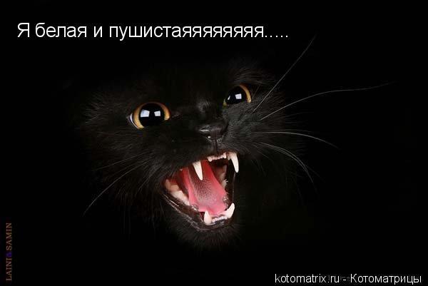 свой цитатник или сообщество!  Черные коты на черном фоне.Фото.