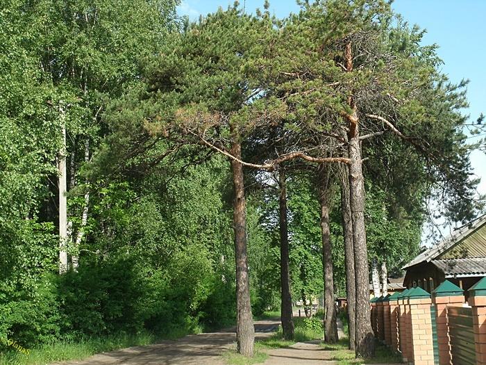 город луза кировской области знакомства