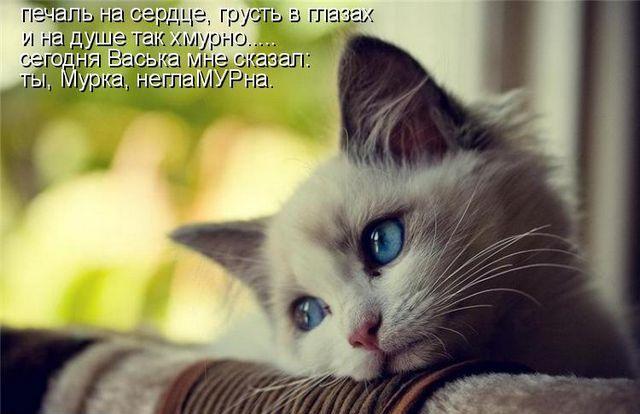 kotomatrix_0991 (640x414, 47Kb)