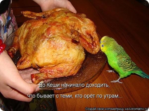 попугай и курица (600x450, 81Kb)