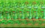 Превью plants_predators_800x500 (700x437, 90Kb)