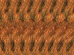 Превью stereogram_0003 (700x525, 159Kb)