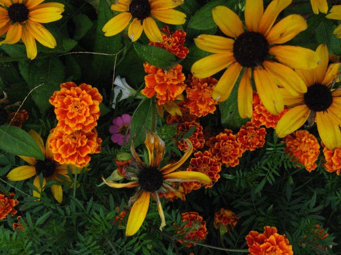 3241851_fall_flowers (700x525, 199Kb)