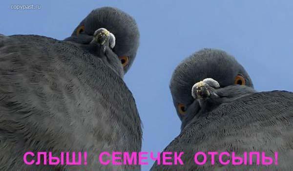 3279591_golybi (600x350, 23Kb)