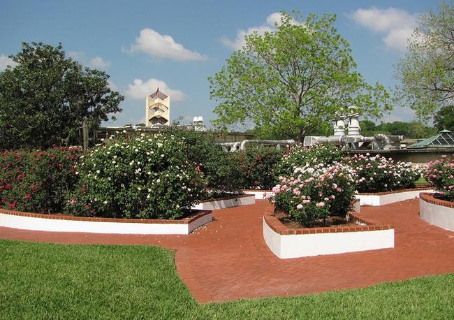 Jenkins Rose Garden  Flickr - Photo Sharing! (650x458, 739Kb)