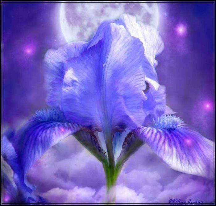 Лунный цветок картинки 8