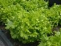 salat (125x94, 9Kb)