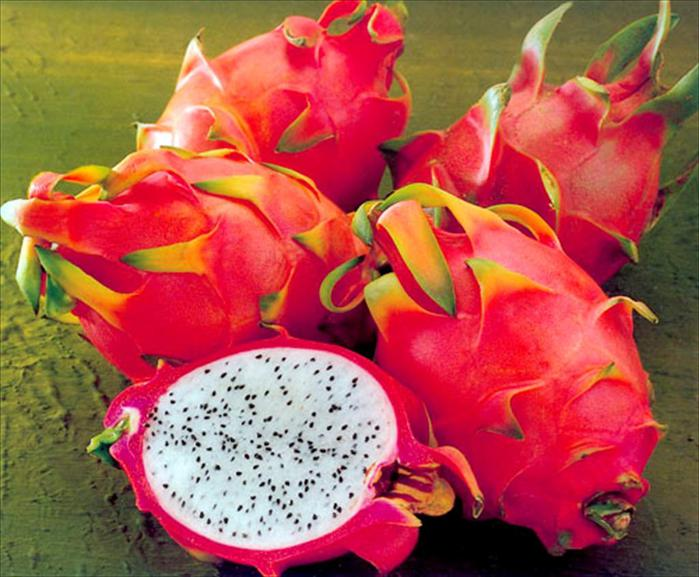 4402578_dragon_fruit (700x577, 66Kb)
