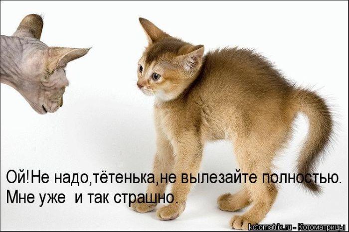 77019954_1308900886_00.jpg