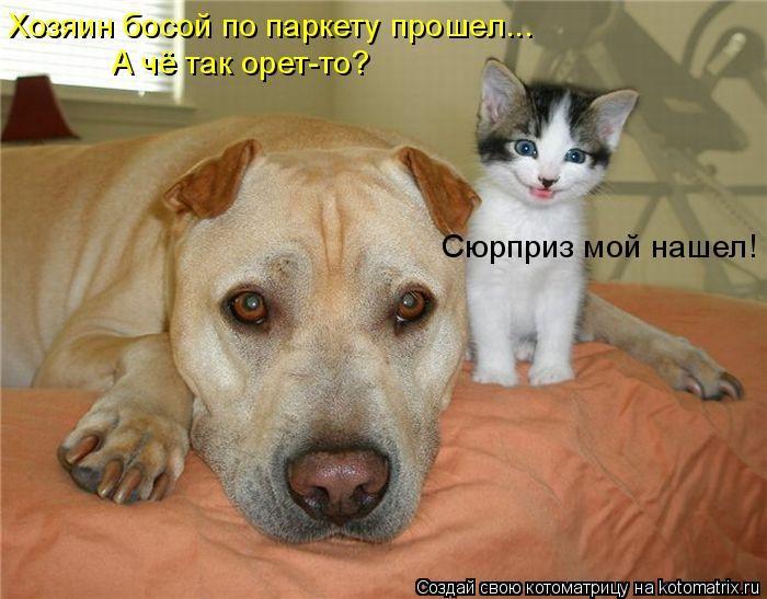 77019958_1308901000_kotomatrix_44.jpg