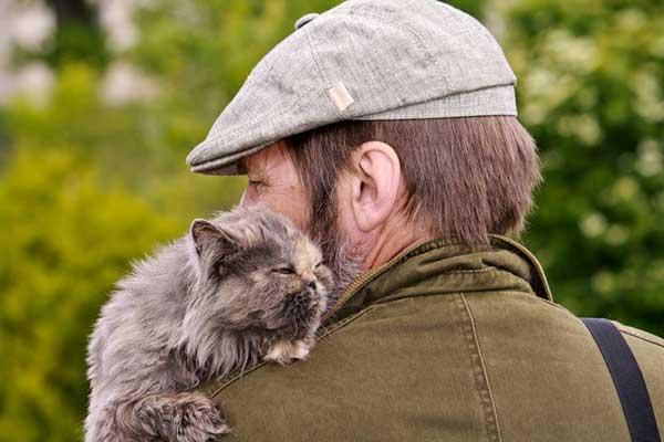 Книга как кошки лечат людей