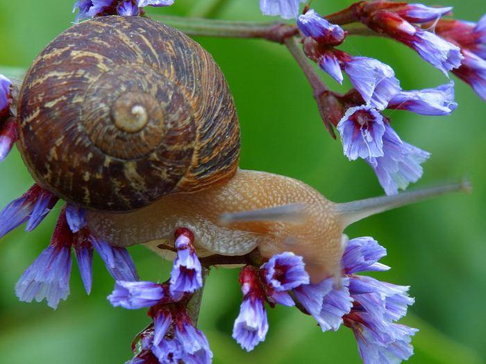 snail_2_bg_112302 (700x525, 61Kb)