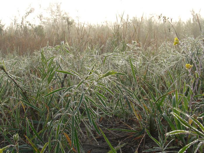 Роса на траве/1313761707_3 (700x525, 239Kb)
