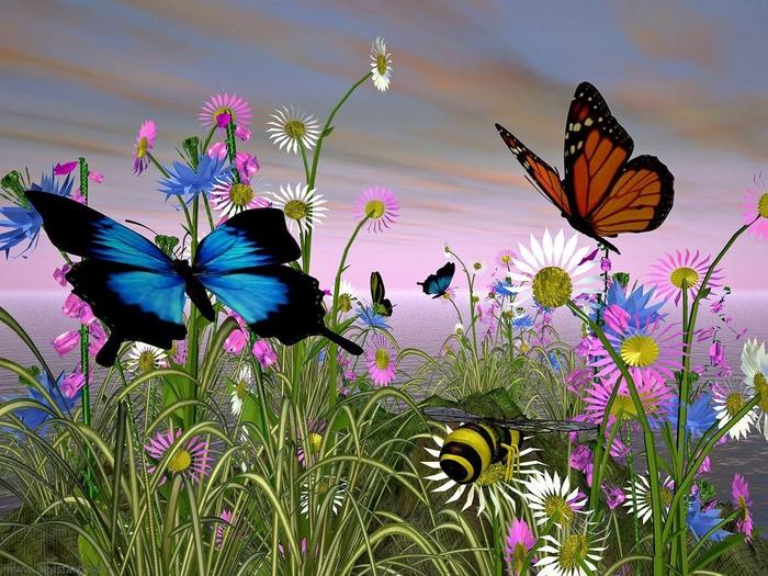 butterfly-8205 (700x525, 197Kb)