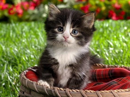 animals-animals-животни-My-things-cat-ANIMAIS-pussy-cat-mine-kittens_large (550x412, 75Kb)