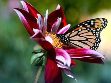 http://img0.liveinternet.ru/images/attach/c/3/77/324/77324564_large_1227125974_w_p_flowers_and_butterfly_8_wallpaper.jpg