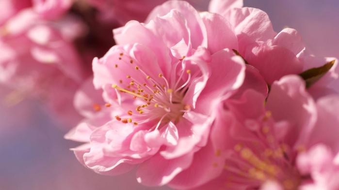 Картинки высокого качества цветы 8